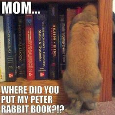 Bunny book worm.  Adorable!