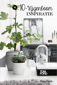 10 x Vijgenboom inspiratie voor binnen! Een schitterende plant die niet alleen buiten schittert, maar ook binnen prachtig staat.