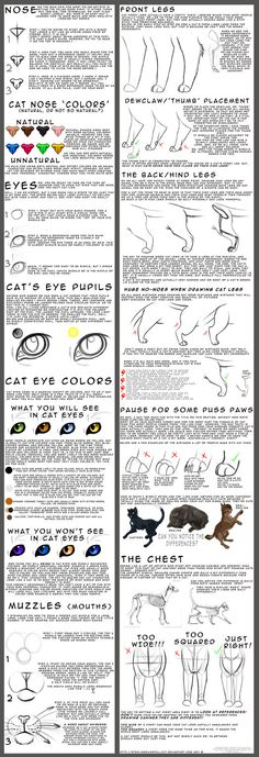 For beginner feline artists by =NinjaKato on deviantART