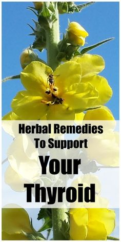 Herbal remedies to support your thyroid