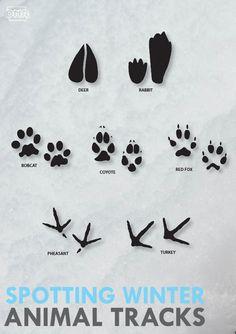 Jump into winter animal tracking | Iowa DNR