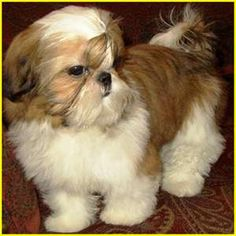Omg!!! I want a baby gizmo again!!!!! I am such a sucker for that fluffy little face!!!!