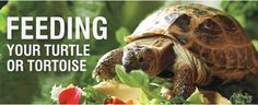 Feeding Recommendations for Turtles and Tortoises