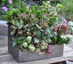 GORGEOUS & GALVANIZED, IN THE GARDEN Janice Wiseman's 'old' chicken feeder, just stuffed with succulents