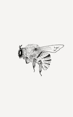 Design + illustration for nature lovers Black And White Bee, Animals Black And White, Black And White Sketches, Bee Tattoo, Tattoo Moon, Tattoo Arm, Tiny Tattoo, Tattoo Fonts, Mandala Tattoo