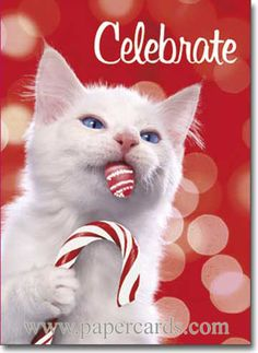 Avanti Plus Christmas Cards, Candy Cane Kitty, 10 Count Christmas Kitten, Christmas Animals, Christmas Colors, Christmas Holiday, Vintage Christmas, Holiday Cards, Christmas Ideas, Funny Cats And Dogs, Cats And Kittens