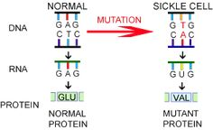 Even without the disease, the gene still affects cells and proteins