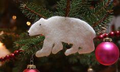 polar-bear.jpeg 500×300 pixels