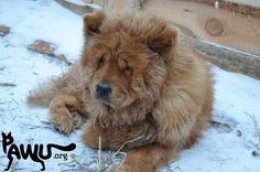 Das Tierheim Sirius braucht dringend unsere Hilfe! | PAWU | Protect Animals with us http://www.pawu.org/category/projekte/tierheim-sirius/