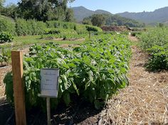 Garden to Table- The French Laundry Garden - Napa Valley