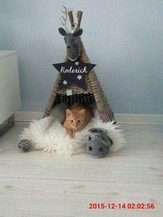 DIY cat #DIYcattoys