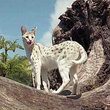 El serval (Leptailurus serval, en ocasiones llamado Felis serval) es una especie de mamífero carnívoro de la familia Felidae.2 Es la única especie de su género.2 Su estado de conservación desde 1996 es de preocupación menor.1
