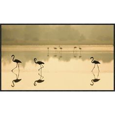 "Global Gallery 'Flamencos' by Martin Zalba Framed Photographic Print Size: 17"" H x 30"" W x 1.5"" D"