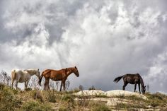 Wild horses - Photography by Salvo Mangiaglia