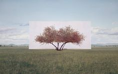 Real Trees on Canvas Background  Artist Myoung Ho Lee chose to isolate trees from landscape in which it is located by putting a white canvas behing. Though this process he underlines its beauty. Artist search to play with the viewer perception who could see real painting in nature. To stage these installations Myoung Ho Lee uses crane and removes digitally the shelves.           #xemtvhay