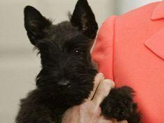 Bush family mourns loss of Miss Beazley via @Jill Meyers Meyers Meyers Meyers Meyers Jackson Norris TODAY