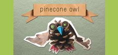 The pine cone owl.