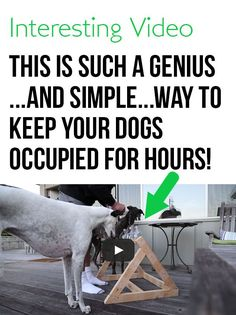 This is such a good idea. I need to try this with my pup! #dogs