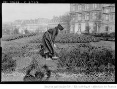 Femme faisant le jardinage aux Tuileries : [photographie de presse] / [Agence Rol]