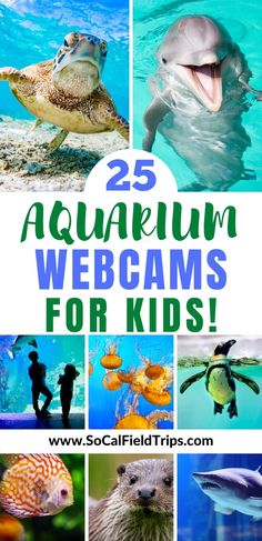 Take your kids on an adventure to visit one of these 25 aquariums around the world who offer live animal webcams! Learn about the ocean, sea life and more. Educational Activities, Educational Technology, Learning Activities, Toddler Activities, Ocean Unit, Virtual Field Trips, Kindergarten Lessons, Summer Activities, Unit Studies