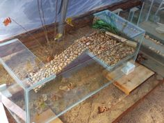 Good basking idea, need something like this for my turtles, they keep sinking the floating one, I got a hefty girl :)