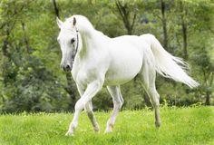 Elismar Hwihíicha': A Paixão Por cavalos