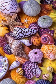 Travel Discover Shells Photograph - Ocean Treasures by Garry Gay Deco Marine Pink Lila Pink Purple Shell Collection Shell Art Ocean Life Sea Life Art Belle Photo Starfish Stone Wallpaper, Beach Wallpaper, Colorful Wallpaper, Galaxy Wallpaper, Nature Wallpaper, Seashell Painting, Seashell Art, Seashell Crafts, Starfish