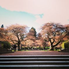 It's almost cherry blossom time!!