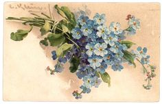 Forget Me Nots  As a child I picked these in my grandmothers yard ! They were everywhere !