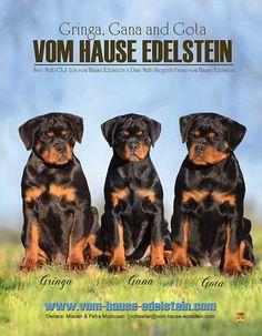 vom Hause Edelstein Mladen & Petra Modrusan Croatia rottweiler@vom-hause-edelstein.com Fluent in English