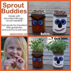 Sprout Buddies - Using recycled Milk Jugs & lids!! A great way to teach kids how seeds grow with fast and easy results. NO SOIL required :).