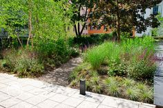 #landscape #architecture #garden #path #meadow