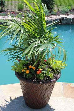Container Gardening Part 1- Steps to help you plan your container garden @joyfulscribblings