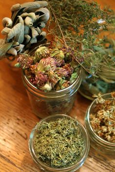 Backyard Medicinal Tea - http://www.ecosnippets.com/food-drink/backyard-medicinal-tea/