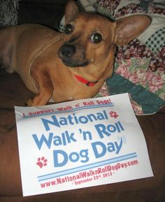 Tobikins supports National Walk 'N Roll Dog Day- honoring and celebrating all dogs in wheelchairs who teach us to embrace each day with love, hope and joy. www.nationalwalknrolldogday.com
