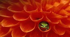 Bing Images - Frog