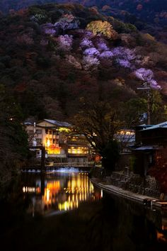 Kyoto, Japan - Temple Grounds at night. - Blossoming Cherry Trees, ghostly in the night - glow from buildings, lights reflecting on water - the Beauty of Traditional Japan, even in modern cities.