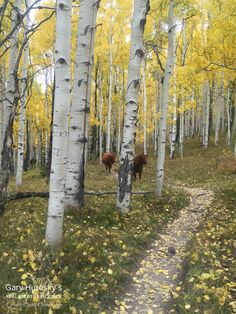 See what it feels like to mountain bike in a Crested Butte yellow aspen grove. Watch the video for a quick experience. Crested Butte, Watercolor Landscape, Mountain Biking, Colorado, Real Estate, Bike Rides, Acrylics, Fall, Birch