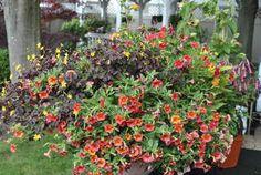 Garden plants to attract hummingbirds and butterflies