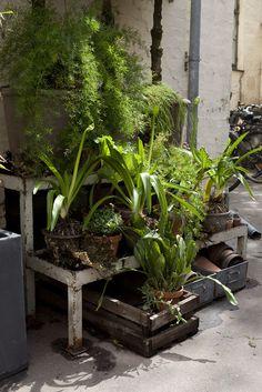 The Most Stylish Plants & Antiques Shop in Copenhagen ♥ Най-стилният магазин за растения и антики в Копенхаген | 79 Ideas
