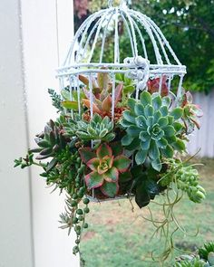 Stop and Admire These Charming Succulent Birdcages — Then DIY Them!, cactus variety Stop and Admire These Charming Succulent Birdcages — Then DIY Them! Vertical Succulent Gardens, Succulent Landscaping, Succulent Gardening, Cacti And Succulents, Planting Succulents, Organic Gardening, Succulent Arrangements, Landscaping Plants, Succulent Display