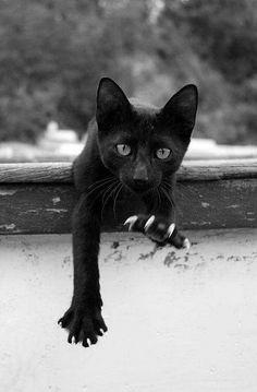 Cats 1, True Friends in Life...