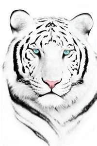 delicate white tiger tattoo - @Shelly_Howard