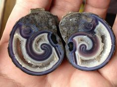 Here you see another fossil from a sea animals. Amazing pair of Purple agatized shells.