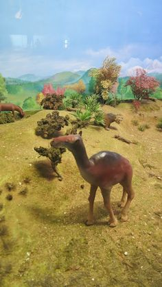 Diarama Kangaroo, Animals, Design, Dioramas, Museums, Culture, Animales, Animaux, Kangaroos