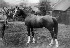 Mesaoud (Aziz x Yemameh) 1887 Purebred Arabian Stallion