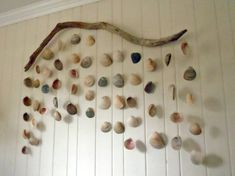 driftwood shell hanging sculpture. 4' long driftwood, cockle shells dangle. eye screw in driftwood for hanging