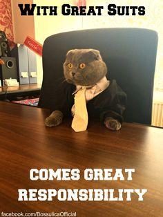 """Bossulica at """"Ham talent""""The cat who has a human job..."""