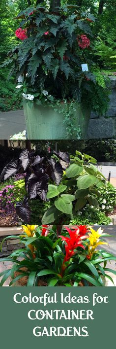 Colorful ideas for container gardens #containergardens
