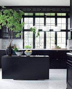 Dramatic black kitchen, love the big green plant.